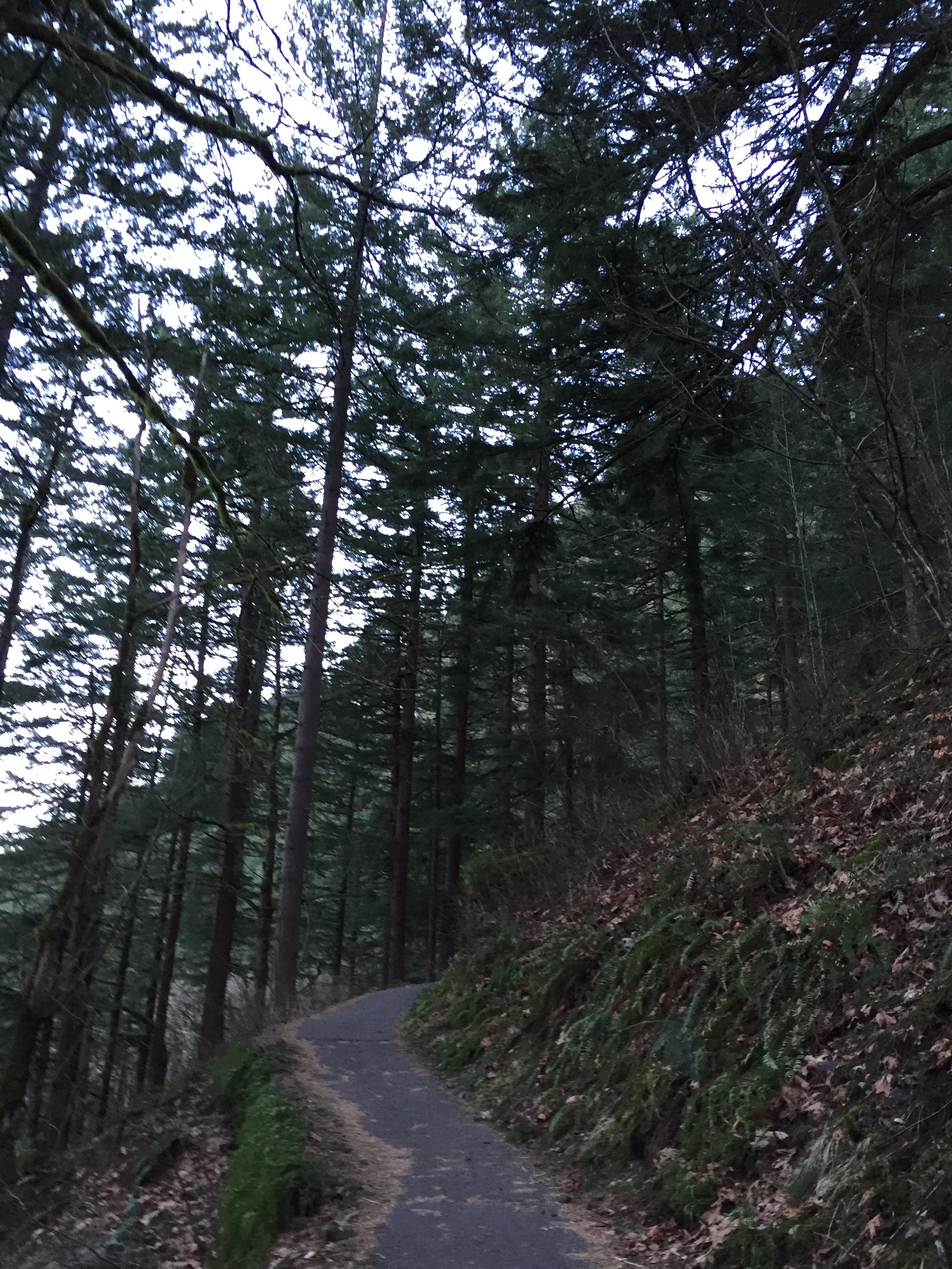 The hike up to Wahkeena Falls